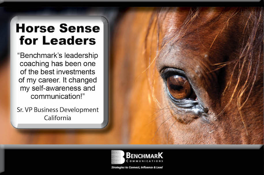 leadership coaching with horses